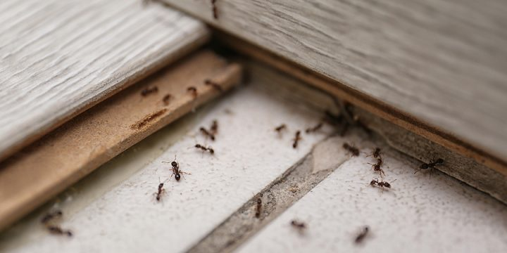 3 Signs That You May Need To Call Termite Pest Control